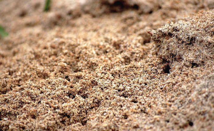 10 trucs pour détruire un nid de fourmis