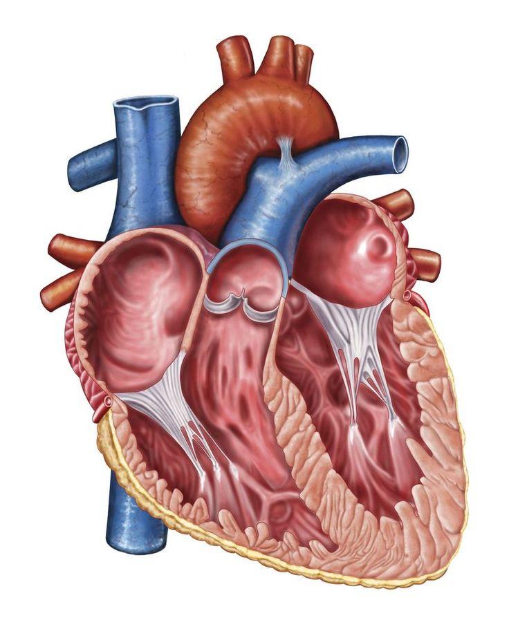Aortic Regurgitation - A Leaky Aortic Valve
