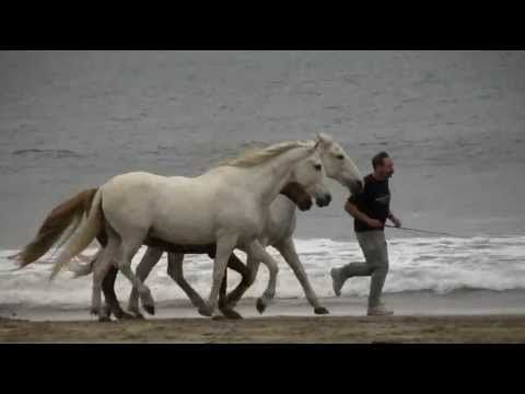 5-Star Parelli Instructor David Lichman and his horses playing at Liberty and riding bareback and bridleless on miles of open beach at Pt. Reyes, California.-----Awesome!
