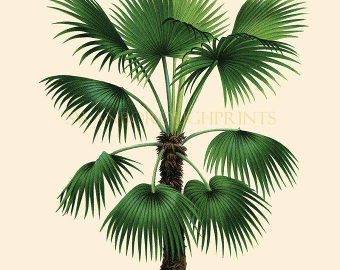 Kust levende Decor tropische palmbomen.  Decor van het huis Vintage Palm Tree illustratie Art Print. Strand stijl badkamer Makeover kunst aan de muur.