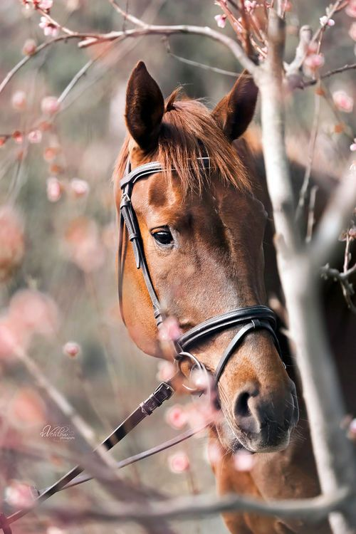 Beautiful horse picture #horse #horses #horselover http://www.islandcowgirl.com/
