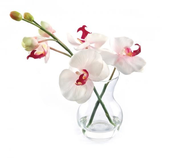 Phalaenopsis Orchid and buds in a pristina vase, set in Still Water™. Pink. Height 22cm. €18.50
