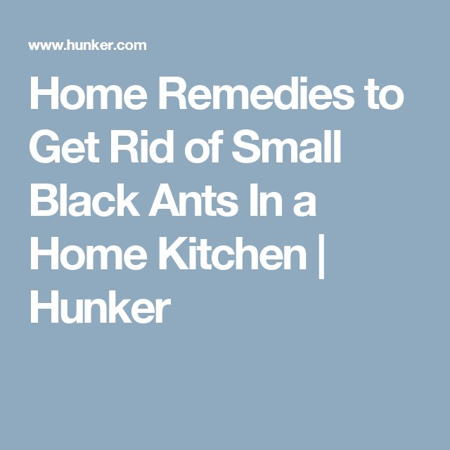 25+ Best Ideas About Black Ants On Pinterest