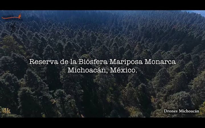 El Santuario de la Mariposa Monarca más grande del mundo '' El Rosario'' en Ocampo Michoacán.   #DronesMichoacan #SomosMichoacan #ElAlmaDeMexico #VisitMexico #Michoacán #SECTUR #Ocampo #MariposaMonarca #Viajera Visit our Site: https://www.areagoods.com