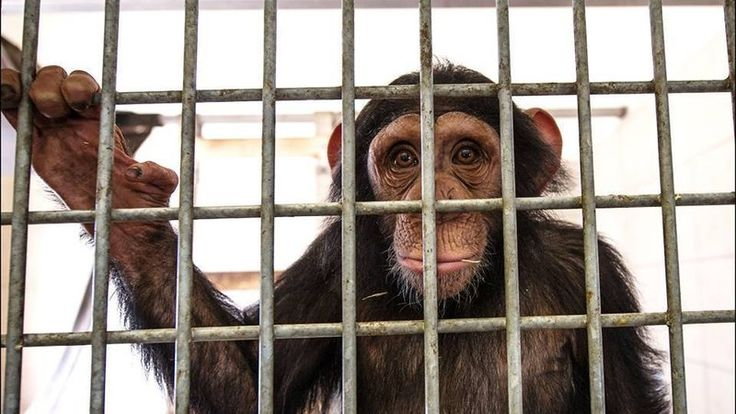 Petition · European Commission: European Animal Protection Act · Change.org
