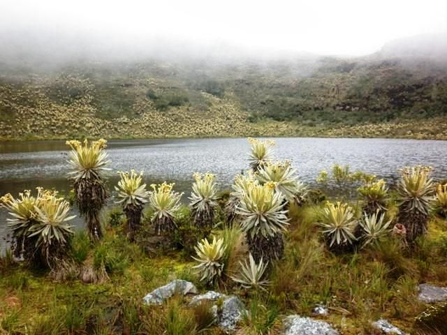 Santuario de Fauna y Flora de Iguaque, Boyaca