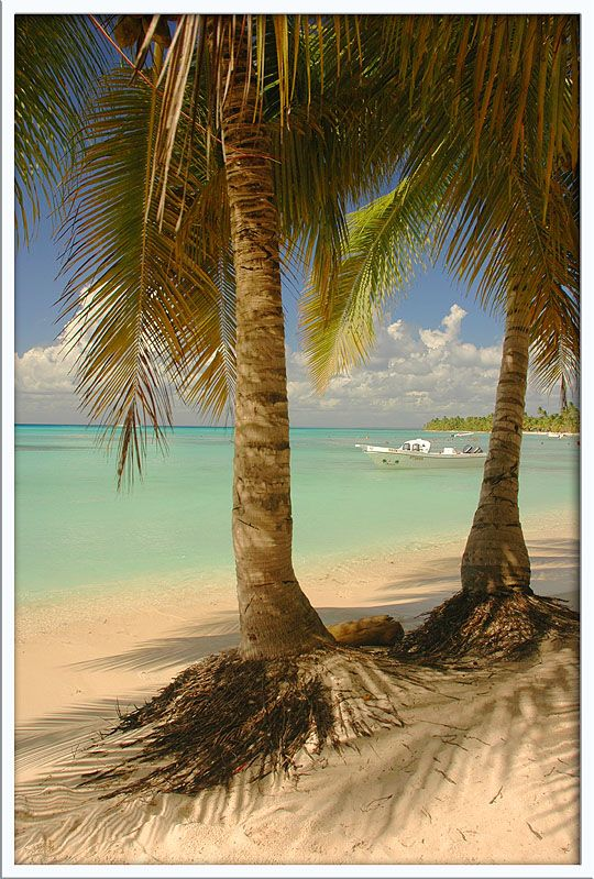 Saona Island, south east of Dominican Republic. Such a beautiful place!