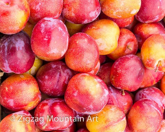 Red Plums fine art matted photograph. Red Plums by zigzagmtart