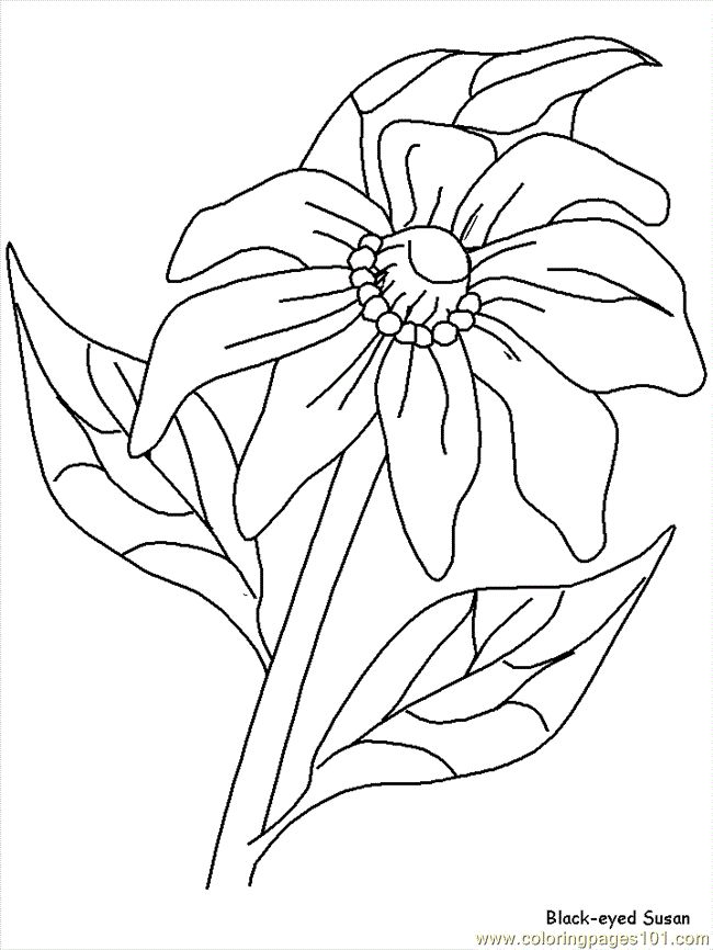 Flower Coloring Pages Susan Page