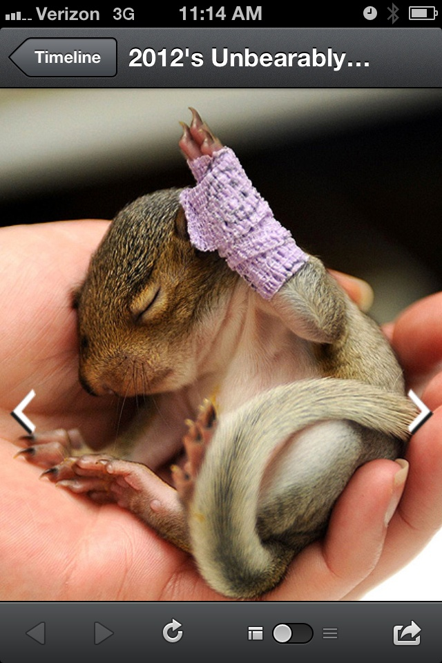 A baby squirrel with a broken leg… It has a cast on