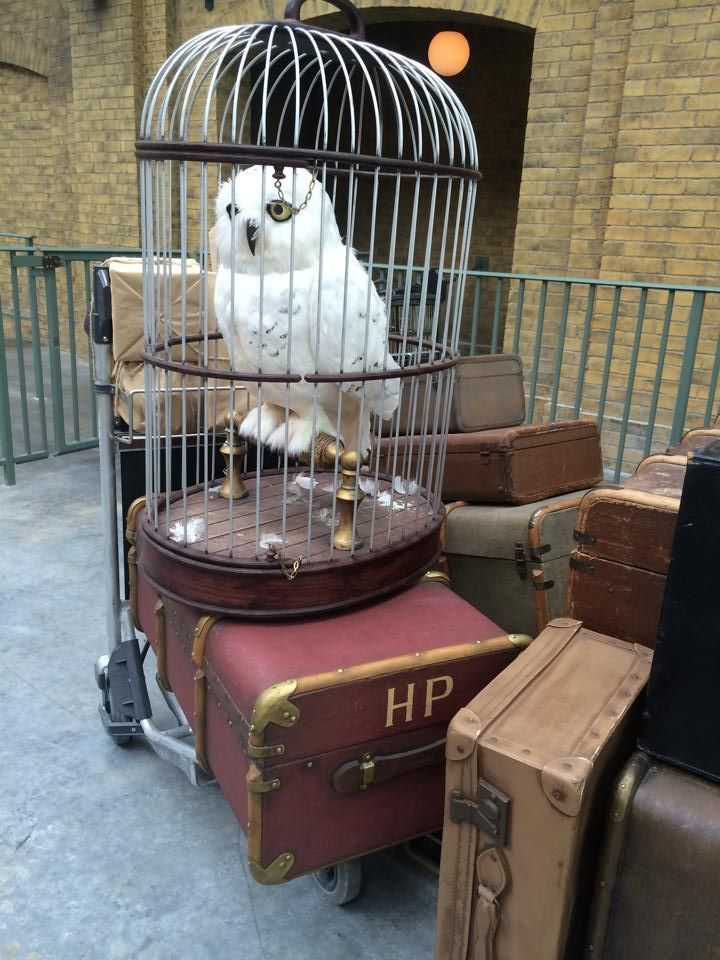harry potter owl cage - Google Search