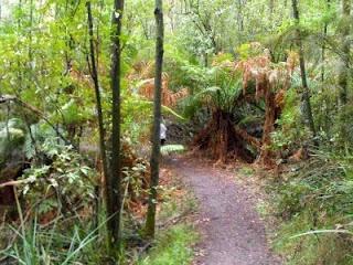 Ferntree Gully Nature Park walk