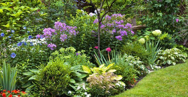 Quand planter ses arbustes persistants planters - Quand planter la lavande ...