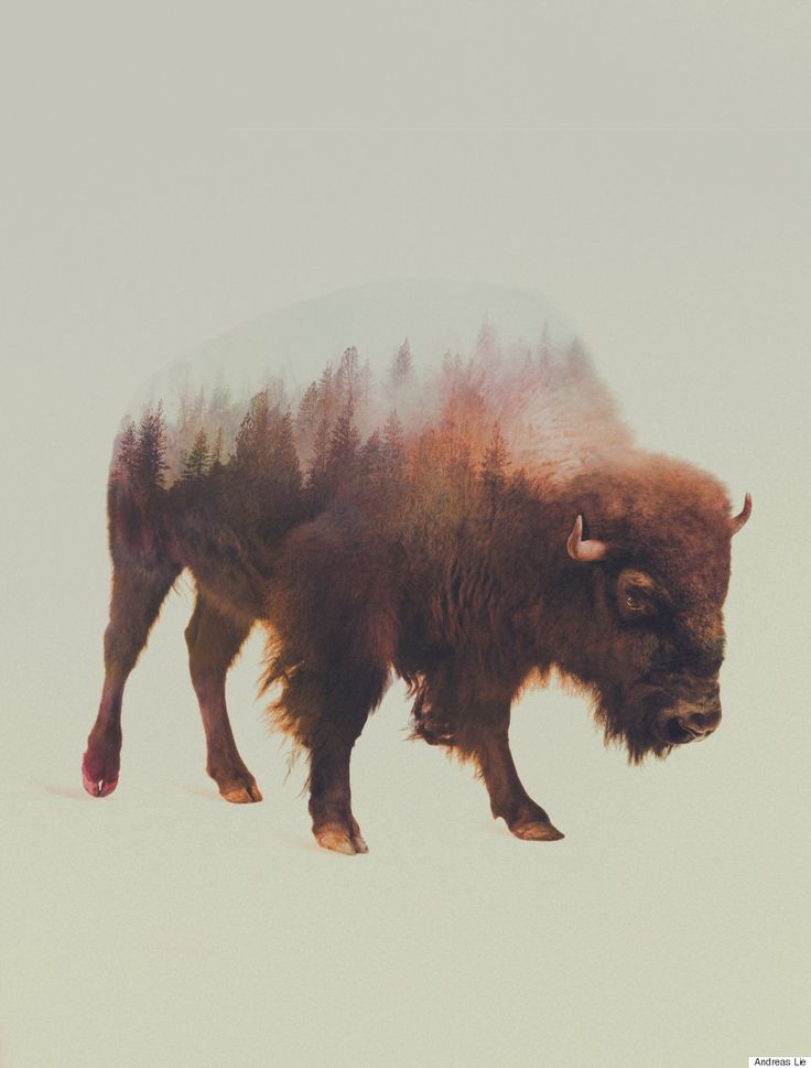 Wild Animals And The Forest Meet In Digitally Merged Photographs