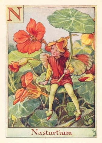 I had a small collection of the Flower Fairy books as a child. You can almost smell the nasturtiums and feel their squeakiness.