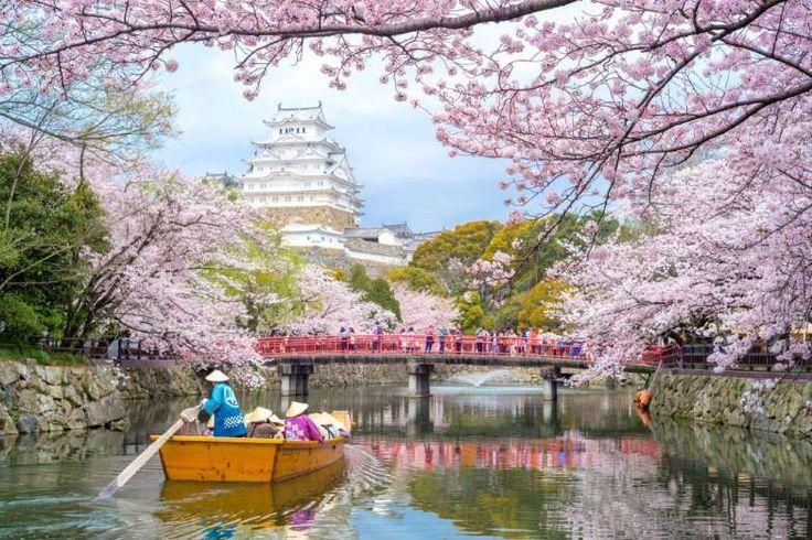 Um lugar estranho e maravilhoso O Japão é o lugar para abraçar e amar coisas estranhas. Se você gost... - iStock