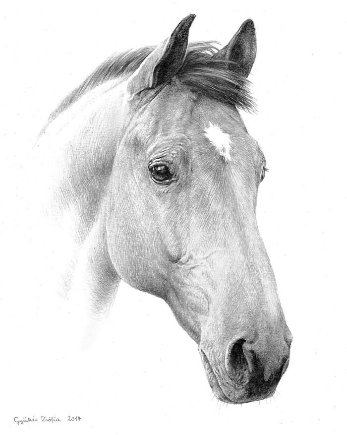 pencil-drawings-of-horses-heads