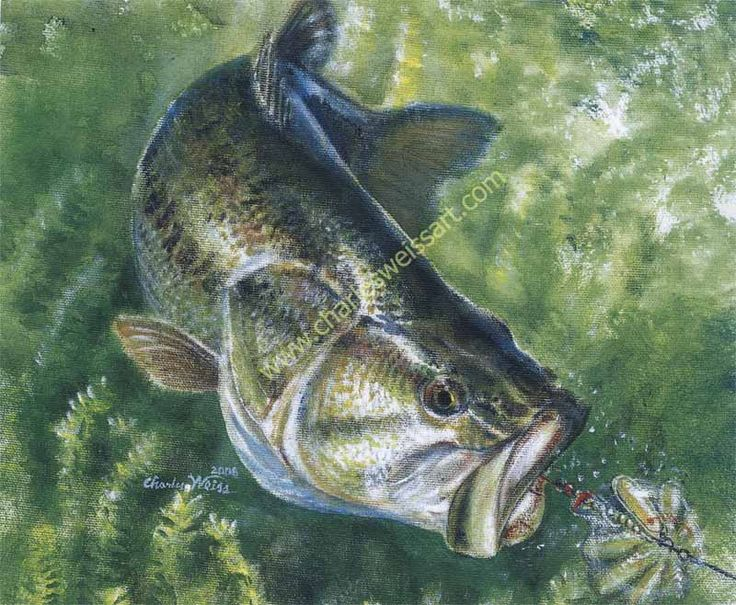 231 best images about bass fishin art for Bass fishing art