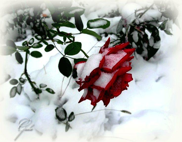 Зимняя открытка с цветами, днем энергетика прикольные