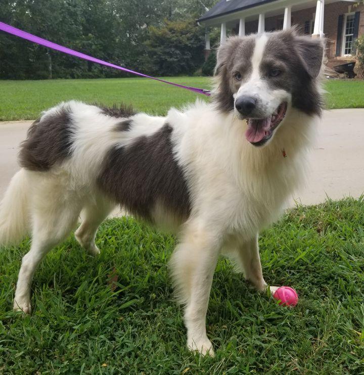 Adopt Archie On Petfinder Dog Activities Dog Adoption Help Homeless Pets