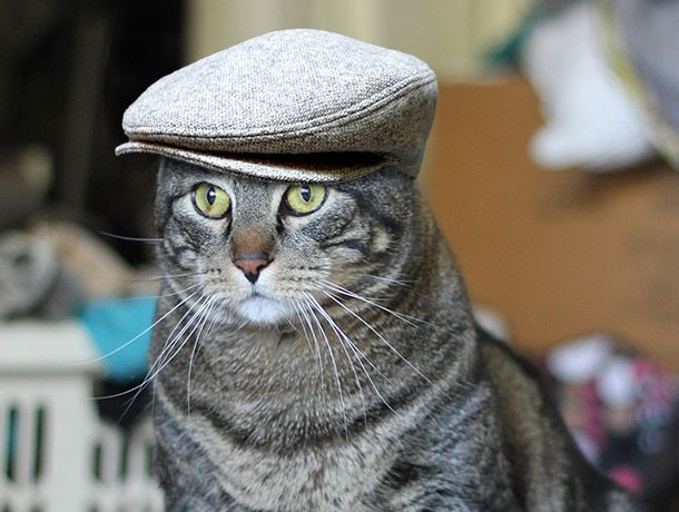 """Men's Gray Wool Driving Cap - It's the Cat's Meow! #fashion #hats"""