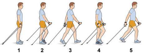 nordic walking benefits - Google Search