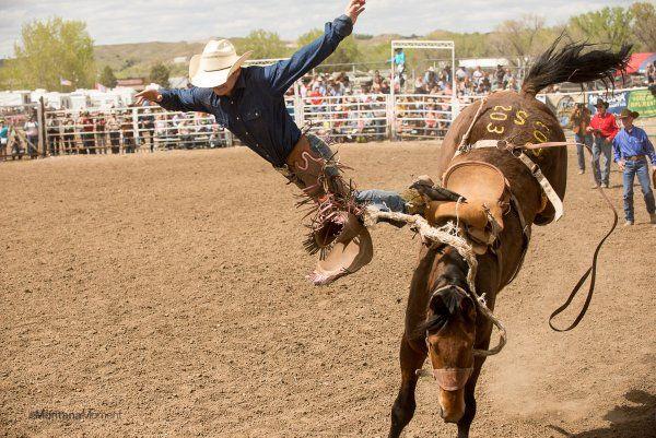 Miles City Montana bucking horse sale