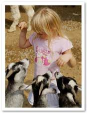 how to start a petting zoo and the questions to ask, permits and insurance to get.