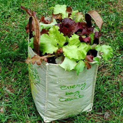 Lettuce Vegetable Container Garden in a Reusable Bag: Gardens Ideas, Growing Lettuce, Lunches Bags, Grocery Bags, Shops Bags, Whole Food, Gardens Container, Gardens Vegetable, Vegetables Container Gardens
