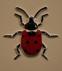 Ladybird  Ladybug