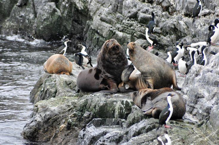 ushuaia,argentina, navigazione lungo canal beagle