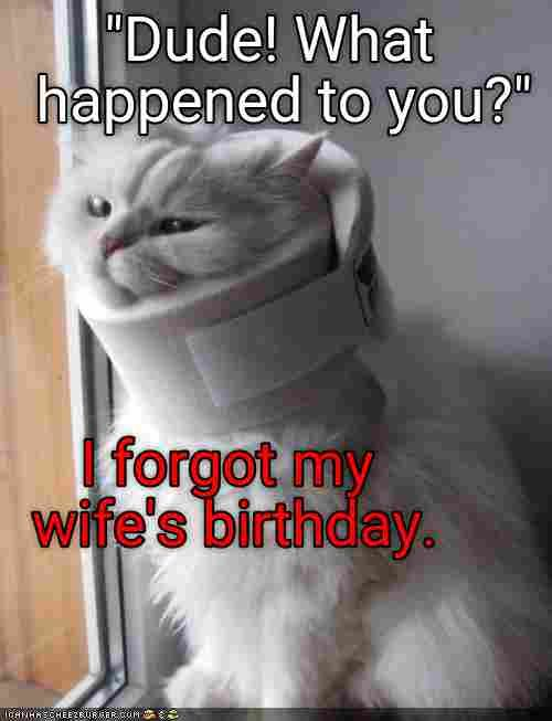 Funny Cat Memes Dump 2018 54 Pictures Ladnow Cute Animals Funny Animal Pictures Cute Animal Pictures