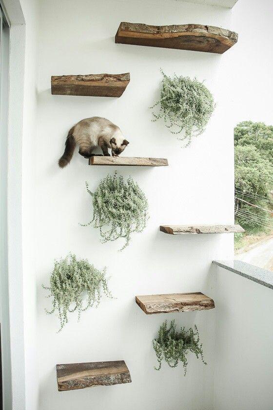 Süße Idee für den Balkon l Spielplatz für das Catnet aber dann bitte