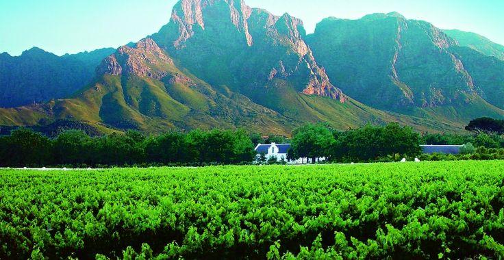 Boschendal Wines -  Beautiful vineyards in Franschhoek