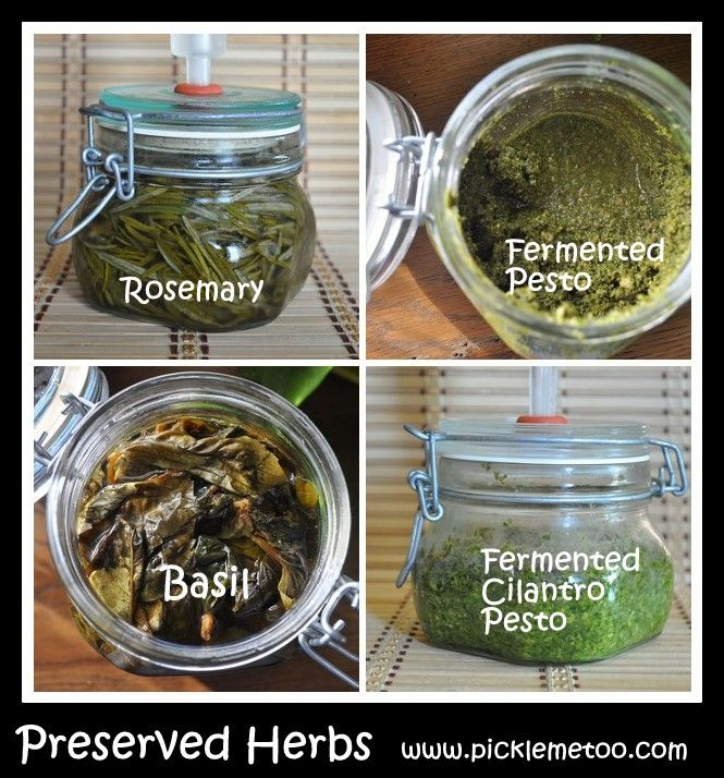 Preserve your herbs by fermenting them. Rosemary, basil, fermented pesto and cilantro pesto.