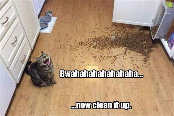 . Check out http://funny-animalz.com/ for amazing and funny animal pictures, videos, gifs and more