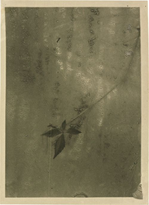 Josef Sudek: Leaf through a fogged window,1942