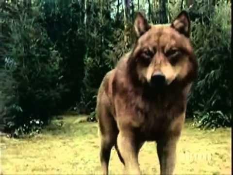 FieryWarriors Klan Şarkısı 3 ( YumruK - BerzaH ) - YouTube