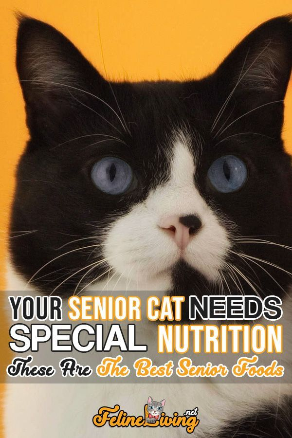 We Love Our Cats And Wish That They Could Live Forever They Do Age Unfortunately But There Is A Good News Diet Can Hel Senior Cat Senior Cat Food Cat Care