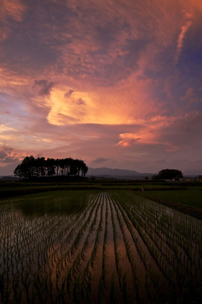 Sunset in rice field, Hachimantai, Iwate, Japan