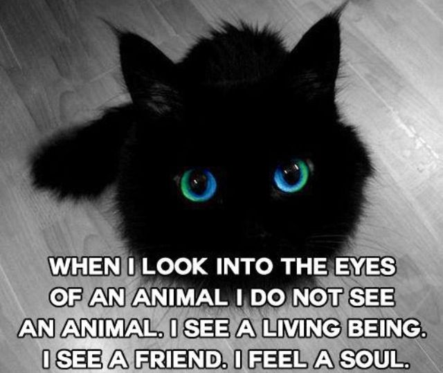 The eyes of an animal