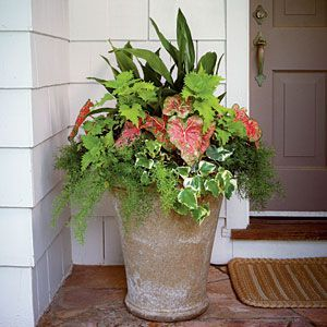 Pretty in white pot in shady spot of porch. Designer recommends before adding potting soil put empty plastic bottles halfway up the pot to save on soil. container thats filled almost full of premoistened soil. Add a cast-iron plant, Moonlight caladiums, Dazzler White impatiens, silver ribbon fern, asparagus fern, Korean rock fern, and variegated creeping fig.