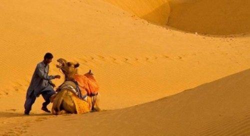 Wielbłądy zdjęcia