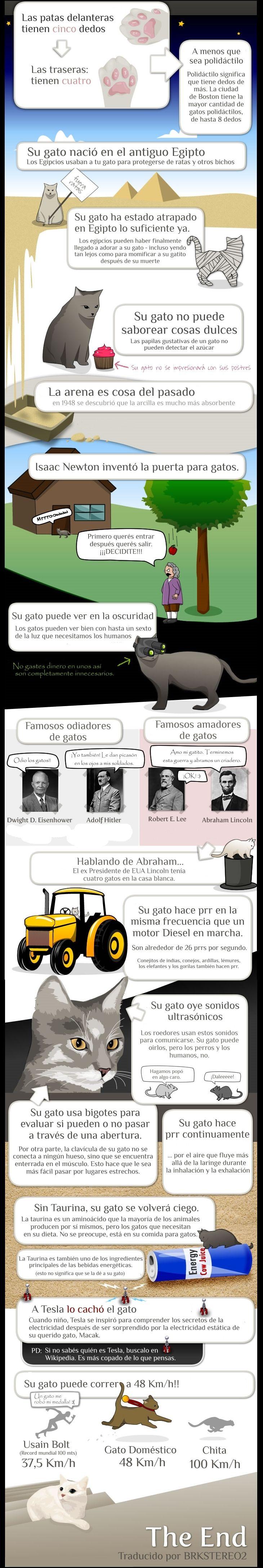 Todo lo que debes saber sobre tu gato http://beautifulfeline26.blogspot.mx/2014/02/todo-lo-que-debes-saber-sobre-tu-gato.html