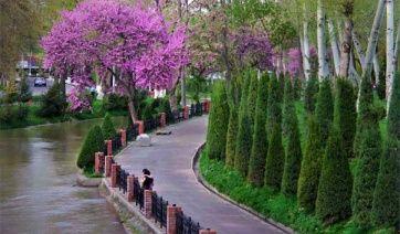 Набережная Анхора пролегает вдоль большого оросительного канала Анхор, который протянулся по центральной части города, с севера на юг. Обилие воды и ветвистых деревьев создает на набережной летнюю прохладу в жаркий знойный день. На набережной расположились многочисленные уютные чайные, кафе. Вниз по течению Анхора находятся кладбище Минор, мемориальный комплекс «Мужество», посвященный землетрясению 1966 года, концертный зал «Туркестан».