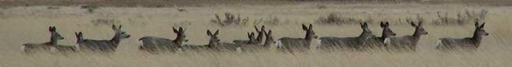 Montana Fish, Wildlife & Parks :: 2012/2013 Hunting Regulations