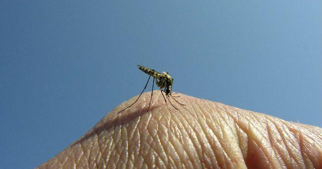 El dengue es una infección que se transmite por los mosquitos Aedes aegypti, los cuales, al picar a los individuos generan una enfermedad grave, con síntomas similares a la gripe
