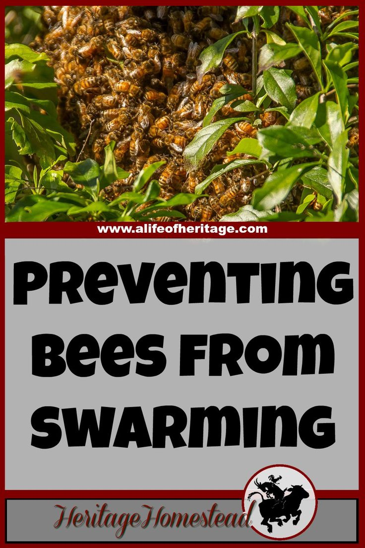 Bees | Bee Care | Bee Swarm Control | Print off this FREE printable to help you manage your hives in the spring to help prevent swarming. Bee swarm control is easy and effective.
