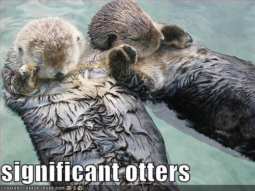 See more 'Otters Holding Hands' images on Know Your Meme!