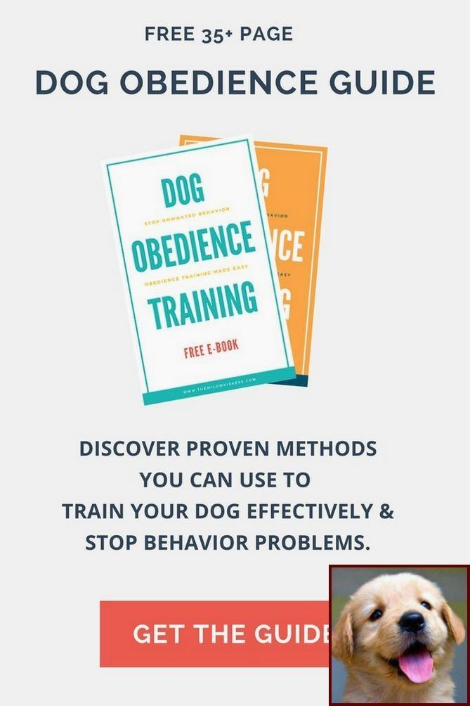 Dog Training Methods Dogtrainingmilton Puppyanddogtrainingtips